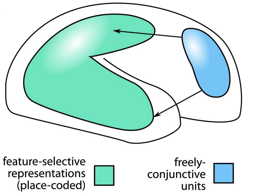 Conjunctive coding neurons in prefrontal cortex