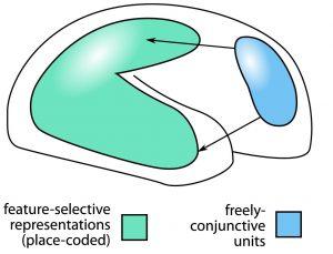 Conjunctive coding neurons in prefrontal cortex
